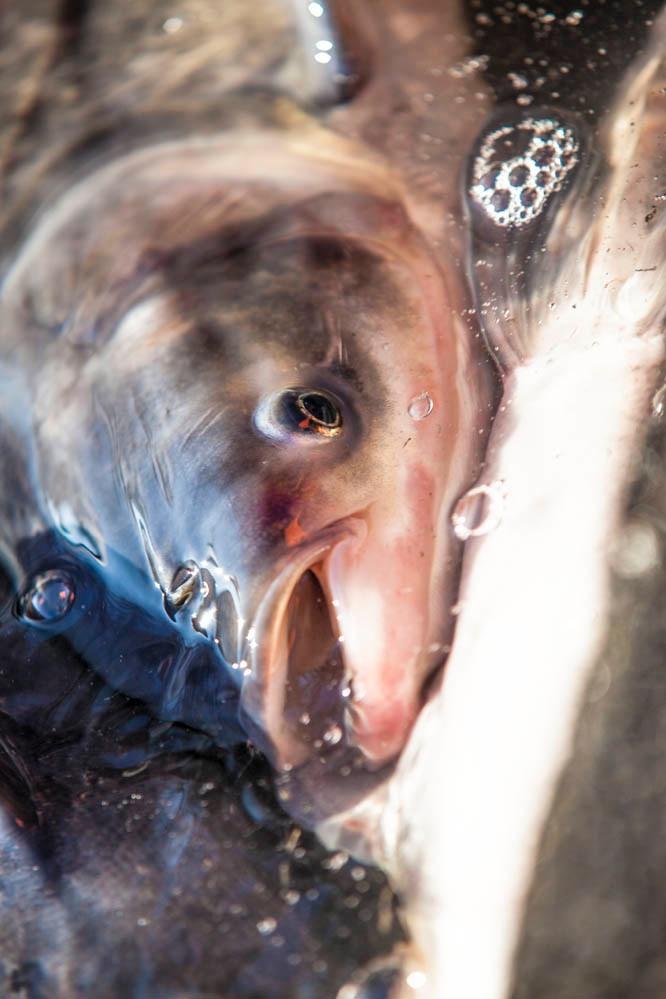 Fishing out - Photo Evina Schmidova (3)