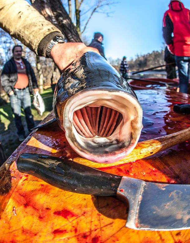 Fishing out - Photo Evina Schmidova (9)