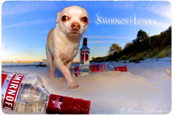 Smirnoff Lover - Photo Evina Schmidova (16)